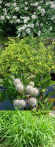 native plants, West Virginia